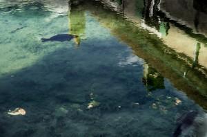 2 présence de l'eau II 2014