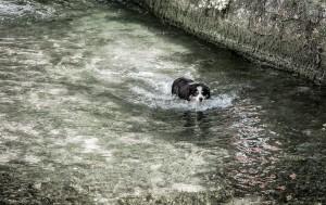 4 présence de l'eau IV 2014