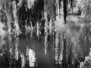 6. Avant de naître, Yvelines, 2004