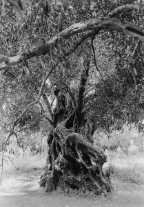 11. Le vieil homme, Crete, 1996