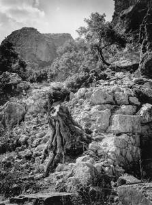 12. Solitude, Crete, 1996