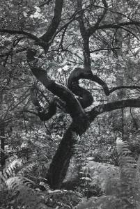 10. Solitaire, Yvelines, 1975