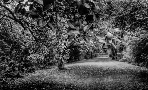 1.Jardin d'Eden Bourgogne,2003
